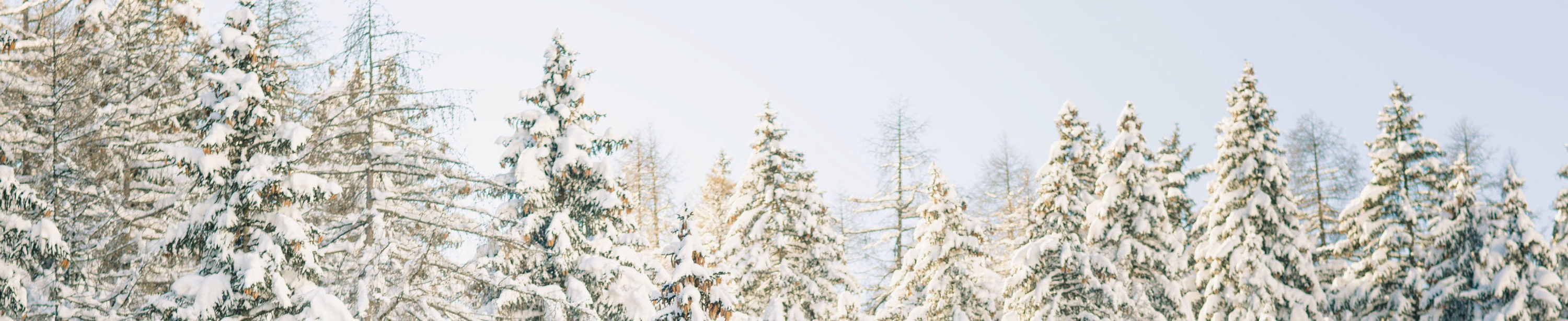 Snowy trees banner image